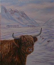 Highland Cow,  Alladale.
