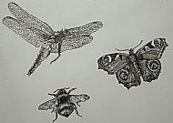 3 Insects - pen and ink