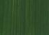 Sap Green 60ml