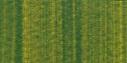 Summer Green 60ml