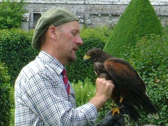 falconry at dunrobin