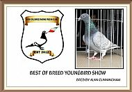 Cork Youngbird Show Winner 2016