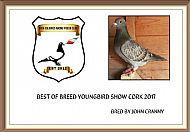 Cork youngbird show 2017