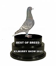 Best Coloured Racing Pigeon Y/B Show 2013