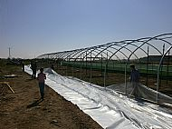 What a lot of plastic! The cover for our latest polytunnel