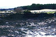 The original bog we built the yard on in February 2004