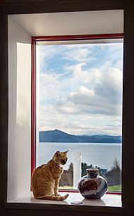 'cat on small window ledge'