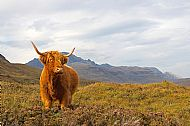 'Red Coo' Janet Macleod
