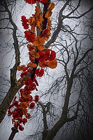 'Tree flowers' Kyla Orr