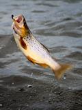 loch eye boat fishing, jumping trout