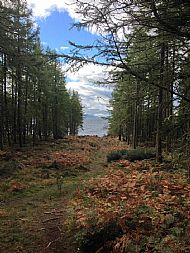 Dores Wood