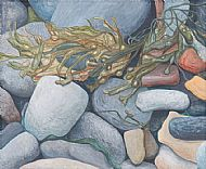 Beach stones and seaweed