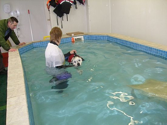 Dolpennau k9 hydrotherapy centre home for Otto swimmingpool