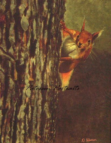 red squirrel painting by david paterson
