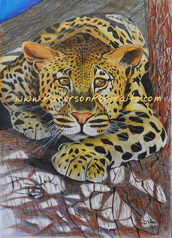 tree leopard drawing by david paterson