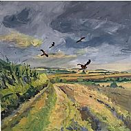 Red Kites over Cross Lane, Aldwincle