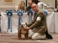 SIRE :CH SAINTGEORGES FLASH HARRY OF BANDAPART JW