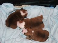 11 DAYS OLD