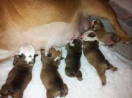 PUPPIES BORN 22/02/2013