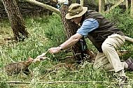 John feeding wildcat at Aigas as part of captive breeding project