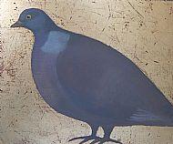 Wood Pigeon Facing Left