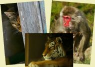 The Animals Set