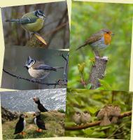 The Birds Set