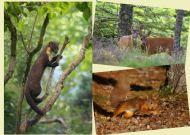The Scottish Mammals Set