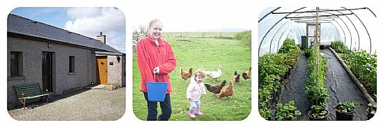 north wald self catering cottage on orkney. feeding the chickens. the polytunnel