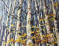 Silver birch woods