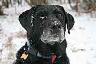 our dog Rowley in the snow