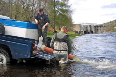 trapping salmon smolts on the river conon