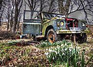 Wild Rover No More Mk 11