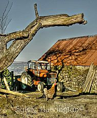 Old Tractor and Hen