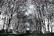 Balinroich Trees