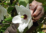 Great Flora  in Benmore