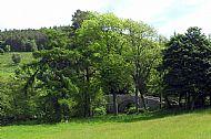 Old Manor Brig near Peebles