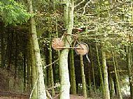 Den of Alyth Walk - Bike up a tree