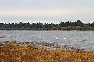 Cameron Reservoir