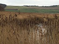 Tay Reed Beds