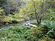 Glamis Walk - Woodland stream