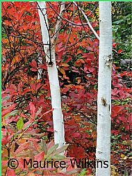 Foliage and bark