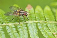Fly on fern