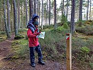 Why not try orienteering in Culbokie Woods?
