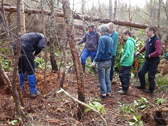 rhododendron clearing
