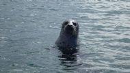 Inquisitive Seals