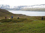 Coastal farm - Iceland (mid summer)