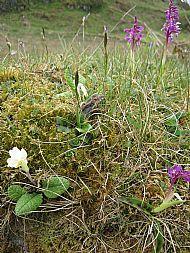 Coastal flora Argyll