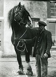 HPA067   Albert Brown? and Stallion (R.H. Robertson)