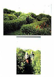 HPA211   Helen & John Scott in their  garden at Stove  (H. Walls)